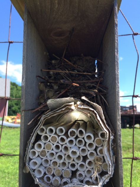pollinator-nesting-tubes-1-2-2