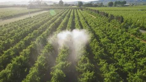 Cloud of spray in orchard